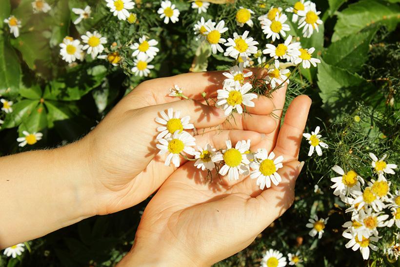 kädet koskettelevat kukkia